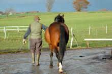 Trainer leading horse over wet terrainTrainer leading horse over wet terrain.
