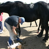 Keeping a horse calm during hoof care.