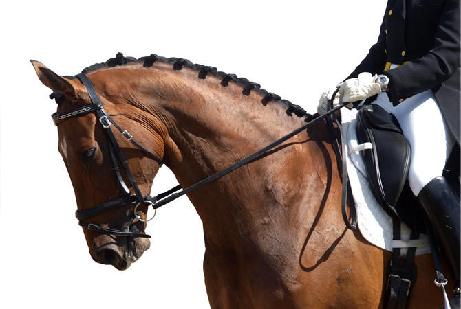 Horse with good neck conformation for dressage.
