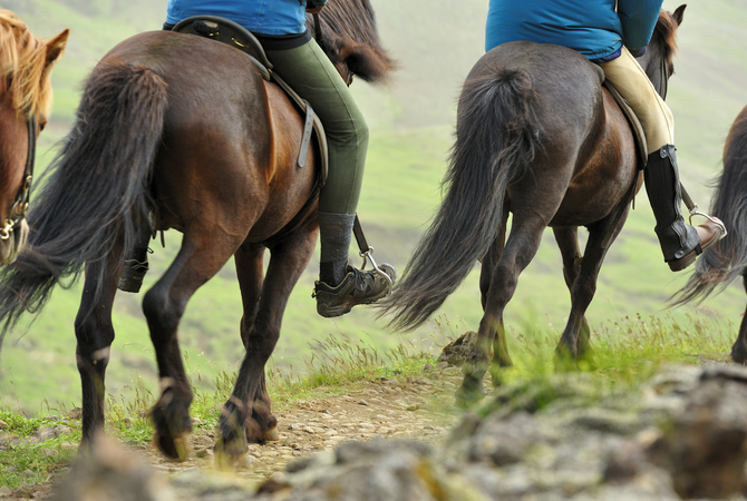 Trail rides: Source of ticks on horses.