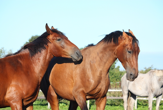 Two horses that don't get along.