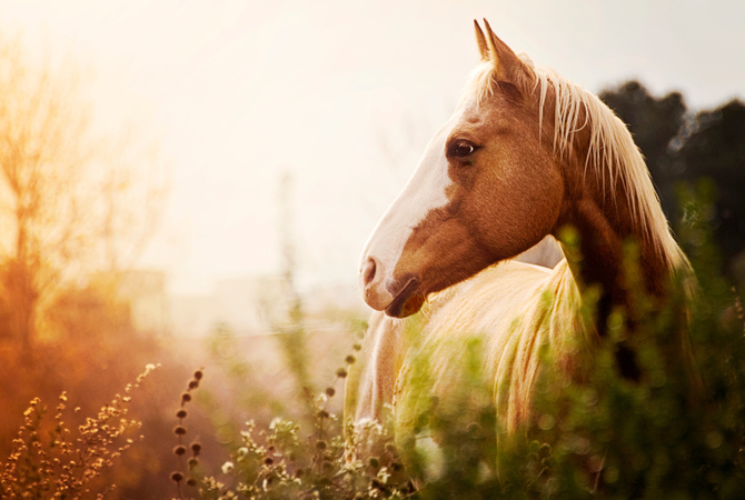 The beauty of a horse on a summer day.
