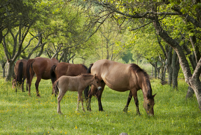 Horses and foal in lush green, tree-canopied pasture