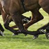 Preventing doping of race horses.