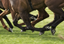 Thundering hoofs of horses racing on turf.