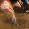 The strong musculature on the rear of a barrel racing horse.