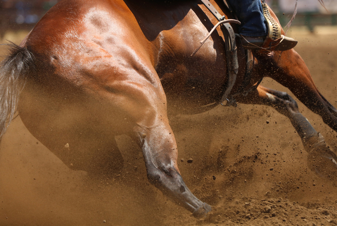 A horse engaged in barrel racing.