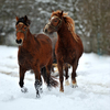 Giving horses a break from cold, snowy weather.