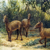 Artists rendition of the eohippus, a small ancient horse.