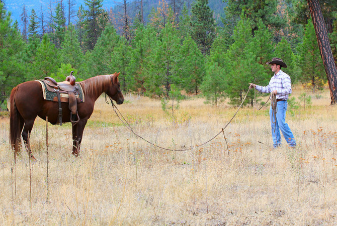 Man training a sorrel horse,