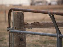 Horse-chewed wood rail on gate.
