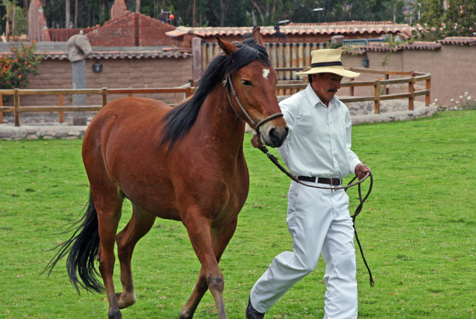 Trainer exercising a horse.