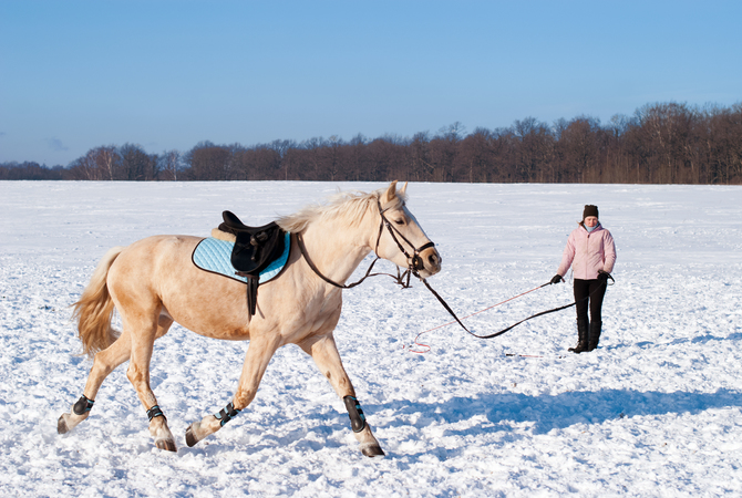 Trainer lunging horse in snow-covered pasture for benefit of resistance training.