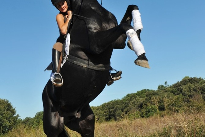 Rider hanging onto spooked, bucking horse.