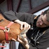 Veterinarian examining a horse's teeth.