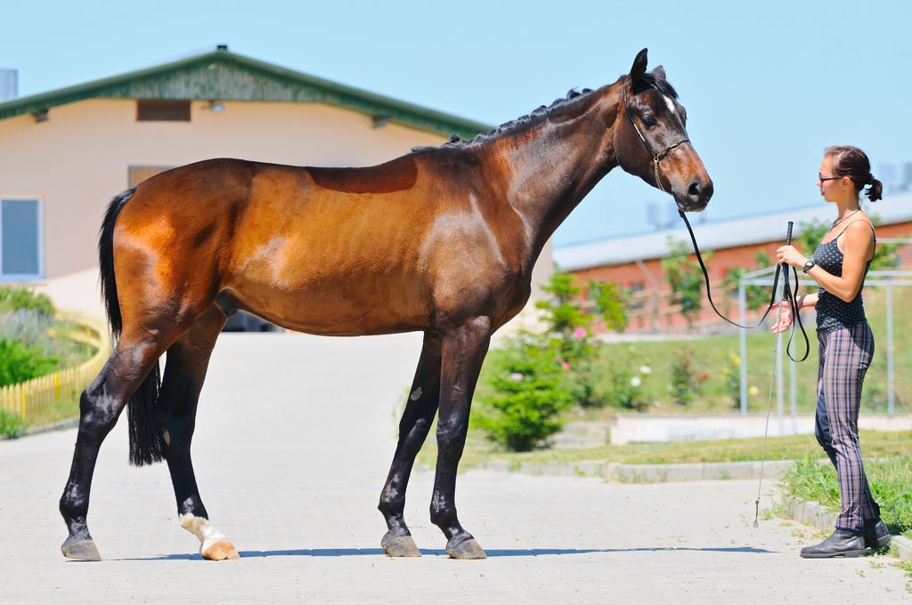 equine health revi due - 1024×680