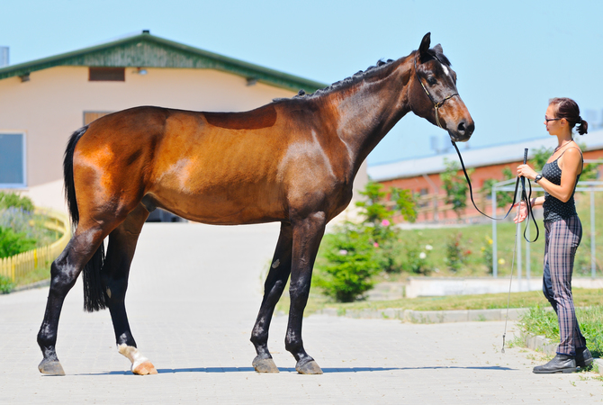 Checkout your horse on a daily basis to be proactive with his health.