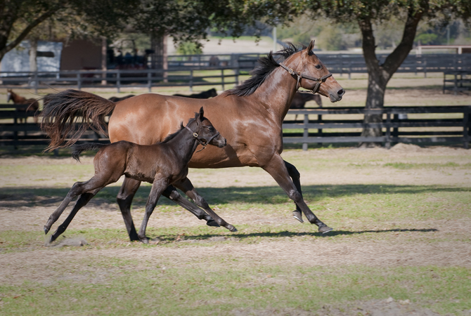 Mare and foal running in paddock