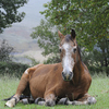 A neglected horse that needs special care.