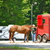 Getting ready to move out with trailer and horse.
