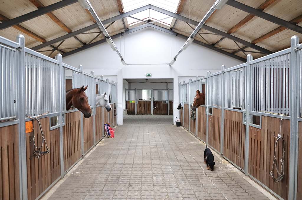 Horse Stables And Stalls What S The Difference Equimed Horse Health Matters