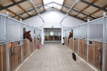 Horses in their stalls watching black dog in barn aisle.