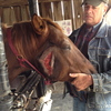 Owner holding head of horse with severe laceration on side of head.