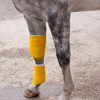 Horse's leg with standing wrap to protect bandage.