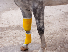 Horse with a bandaged leg.
