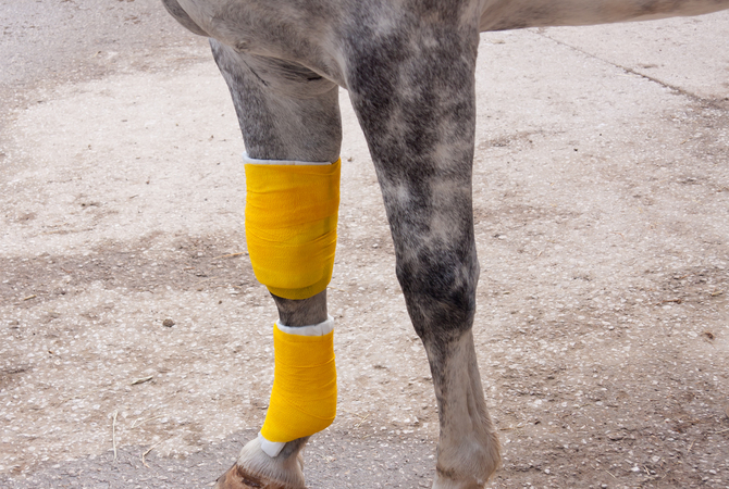 Importance of never ignoring signs of lameness.