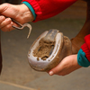 Owner cleaning out and picking horse's hoof