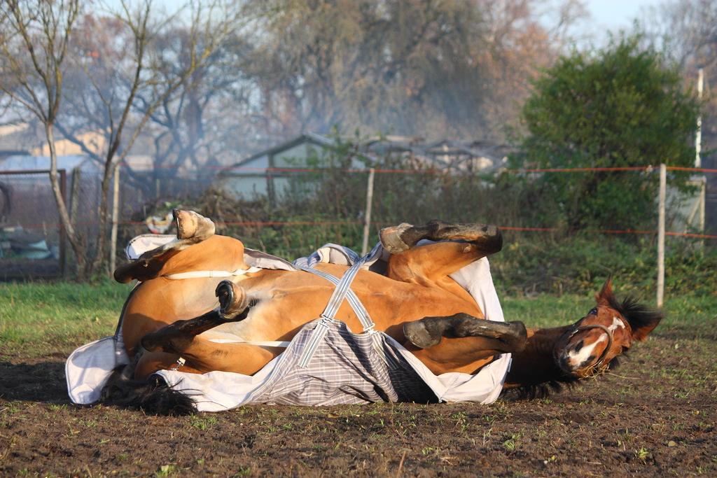 equine health revi due - 1024×683