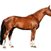 Form meets function in a horse with good conformation.