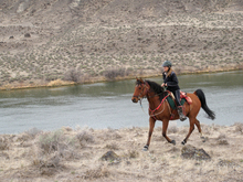 Solitary rider and horse on an endurance river trail.
