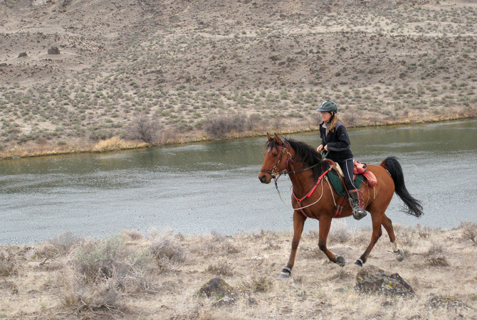 Horse and rider on endurance ride.