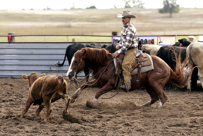 Cutting horse shows the benefits of interval training.
