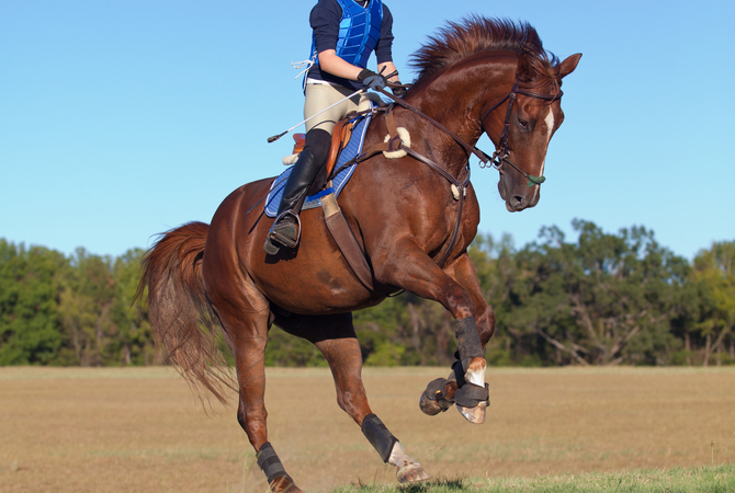 Well-conditioned horse galloping on trail.