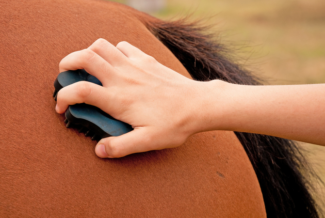 Importance of touch and massage techniques in keeping horses in tip-top condition.