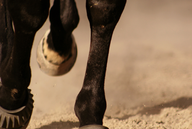 Horse wearing bell boots.