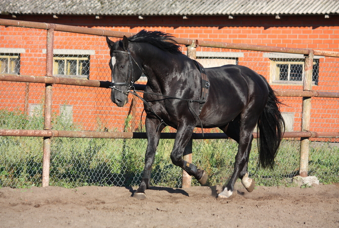 Few horses have straight perfectly conformed legs.