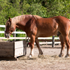 Keeping horse digestive system healthy.