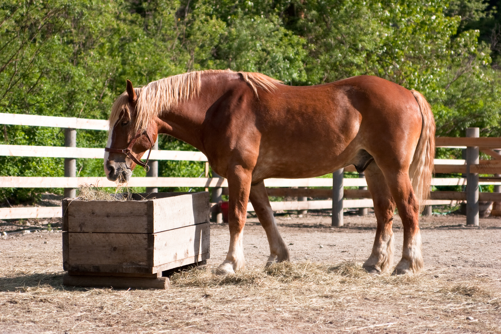 Feeding And Watering Your Horse Equimed Horse Health Matters