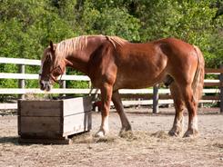 Do Homemade Equine Fly Sprays Really Work?   EquiMed - Horse