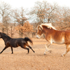 Horses invigorated by changing seasons.