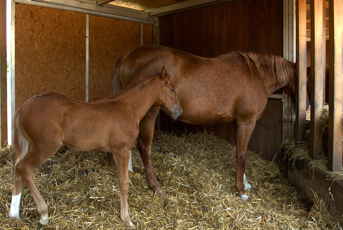 Mare and filly in stall with clean straw bedding.