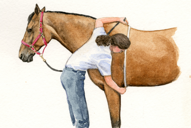 Measuring a horse to calculate his weight.