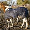 Horse wearing a winter blanket.