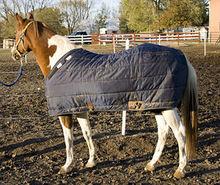 Horse in warm winter blanket.