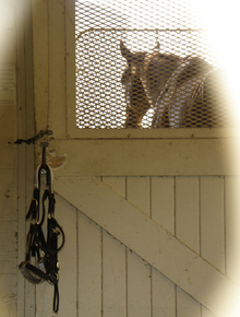 Horse in enclosed stall.
