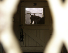 Horse waiting for services of a vet tech.
